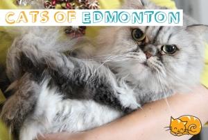 Cats of Ed Blog Thumb