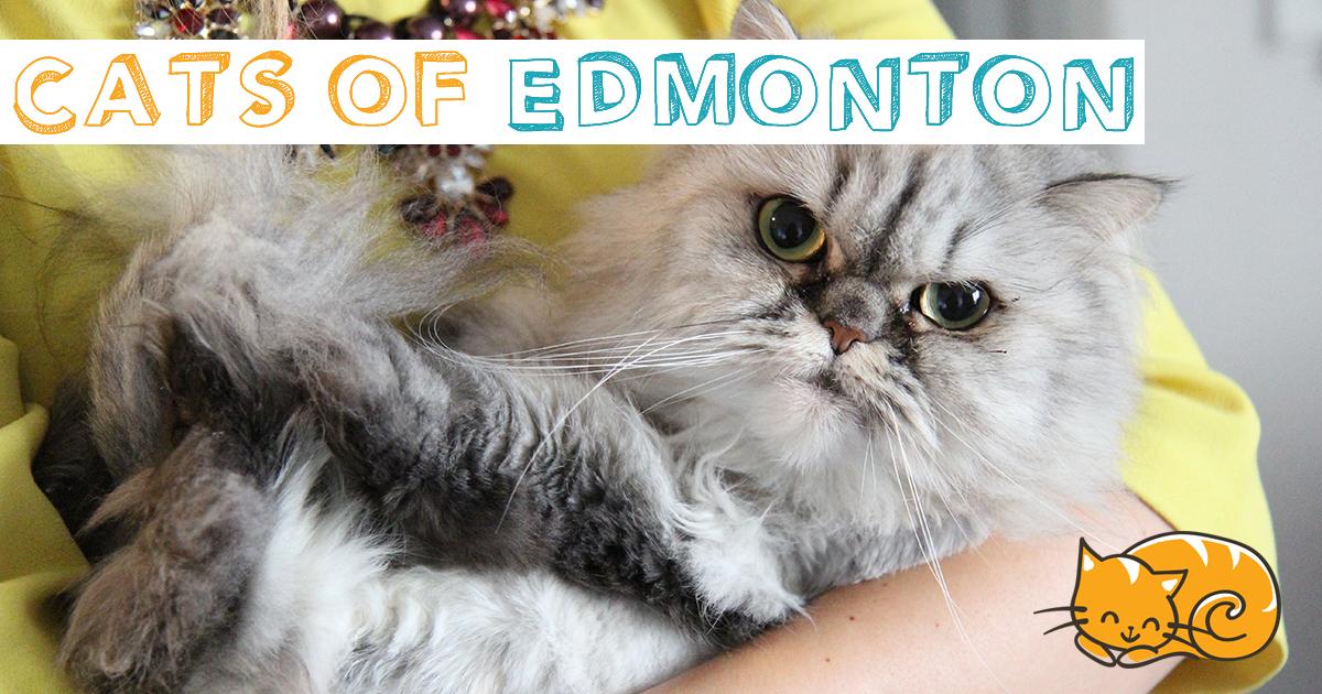 cats of edmonton indiegogo