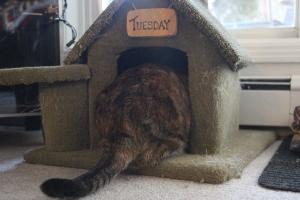 Cats of Edmonton - Tuesday